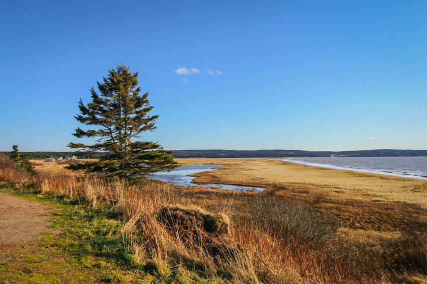 Beach Nature Sand Landscape Sea Scenics Water Outdoors Beauty In Nature No People Sky Day Horizon Over Water Travel Destinations Vacations Tree Clear Sky Sand Dune Fundy National Park Newbrunswick Saint John Moncton Waterview