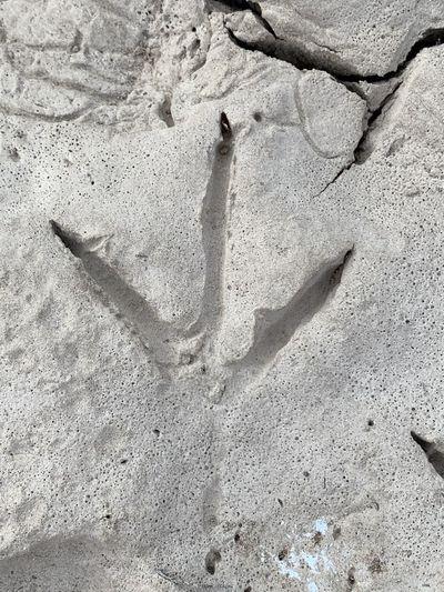 Bird Foot