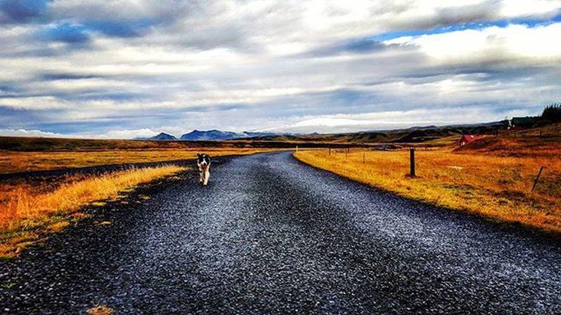My New Friend :) Mansbestfriend Dogstagram Dogsofinstagram Instadog Dogs Whyiceland
