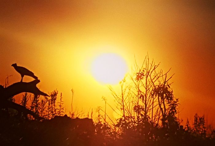 Sunset Caminhada Diatop Silhouette Nature Outdoors No People Animal Wildlife Sunlight Animals In The Wild Sun Sky Plant Beauty In Nature Scenics Day Rural Scene Animal Themes