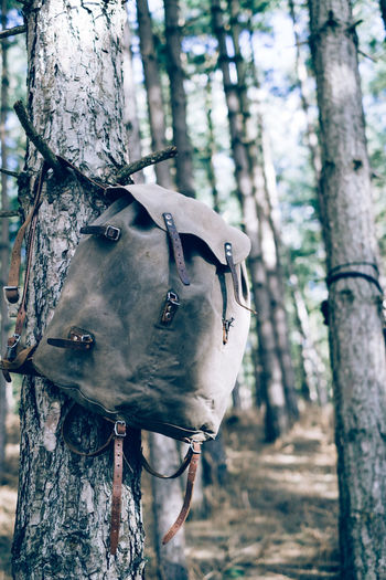 Camping Canvas Hiking WoodLand Bag Bushcraft Camp Forest Nature No People Outdoors Rucksack Scouting Survival Tree Tree Trunk Vintage