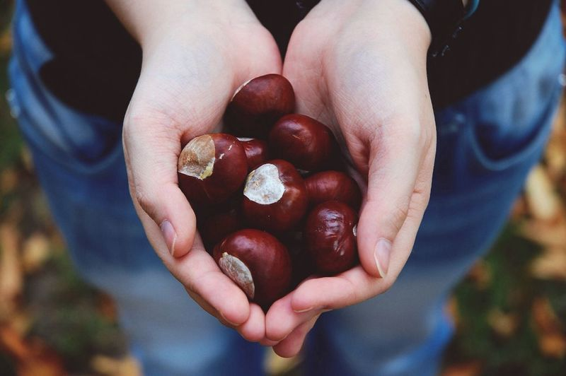 Midsection Of Person Holding Chestnuts