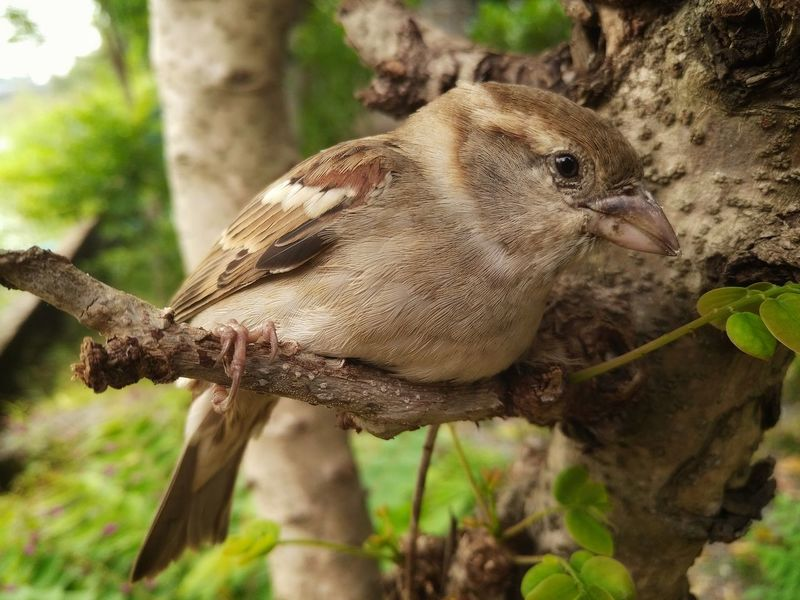 Animal Themes No People Animal Wildlife One Animal Nature Day Close-up Outdoors Animals In The Wild Tree Bird Mammal Tree Beauty In Nature Sparrow On A Branch Sparrow Nature Animals In The Wild EyeEm Ready