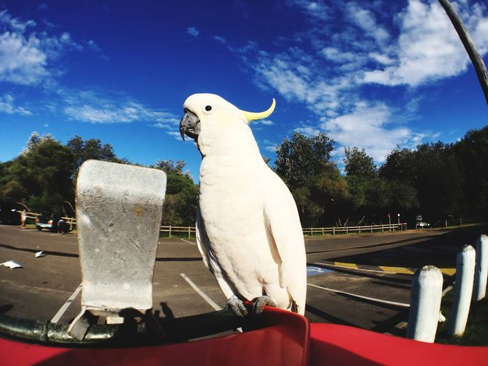 Close-up of a white parrot