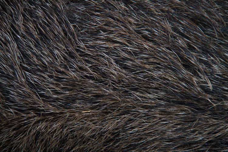 Full frame shot of wild boar