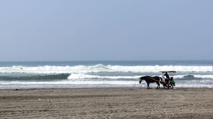 Andong in Parangtritis beach Parangtritis Tradition Traditional Transportation Vacations Yogyakarta, Indonesia Adventure Andong Animal Beach Beauty In Nature Horse Land Mammal Nature Outdoors Riding Sand Sea Sky Tourism Traditional Travel Destinations Water Wave