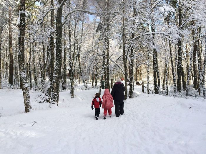 Rear View Of Family Walking At Snow Covered Forest