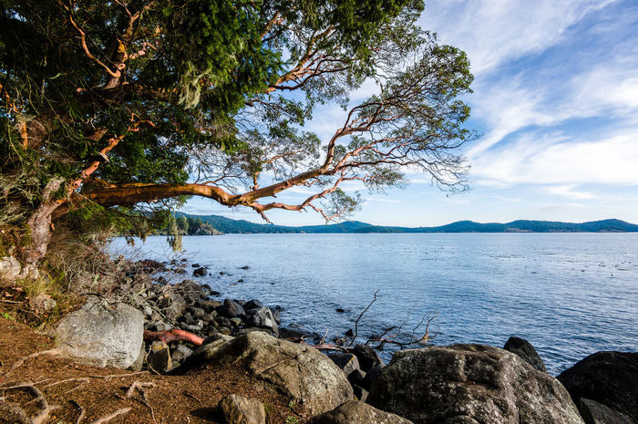 East Sooke Park, Vancouver Island Arbutus Tree Madrona Tree Oceanside Dramatic No People Park Rocks And Water Tranquil Scene