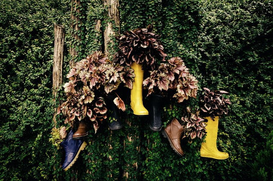 Yellow Boots Garden Photography Garden Garden Flowers Garden Art Stump Landscape_Collection Vantage Retro Classic Background Autumn Foliage Plant Rubber Rubber Boots Conceptart Concept