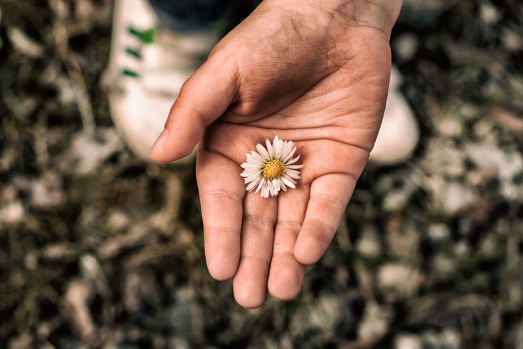 Cropped Image Of Man Holding Flower