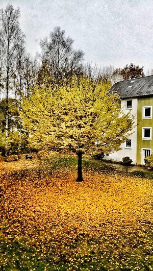 Tree Yellow Sky