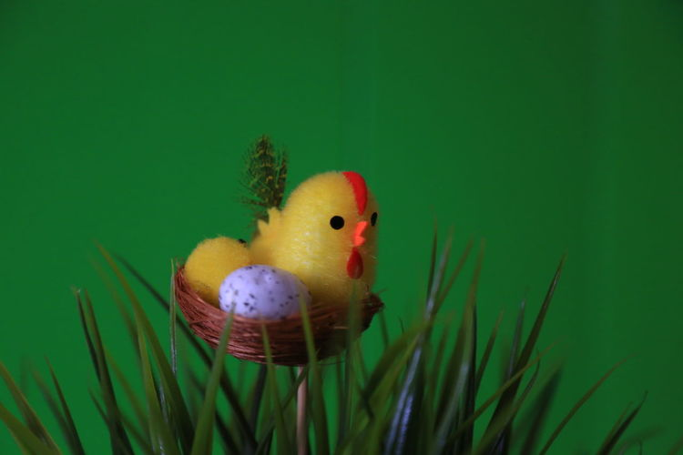 Isolated Easter Deco series Nofilter The Purist (no Edit, No Filter) Raw Noedit Raw Photography Raw Image Easter Easter Egg Wielkanoc Chick Grass Green Background Springtime Springhassprung Easter Decoration Easter Ready Stock Photography Stock Image