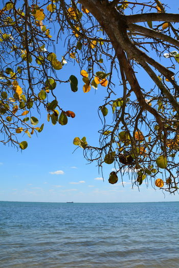 Cargo vessel seen through the shoreline seagrapes No People Outdoors Horizon Over Water Tree Beauty In Nature Blue Day Water Tampa Bay Waterview Ship Ocean Vessel Sea Vessels Cargo Ship Horizon Tranquility Colorful Foliage Tranquil Scene Seagrape Seagrapes Blue Sky