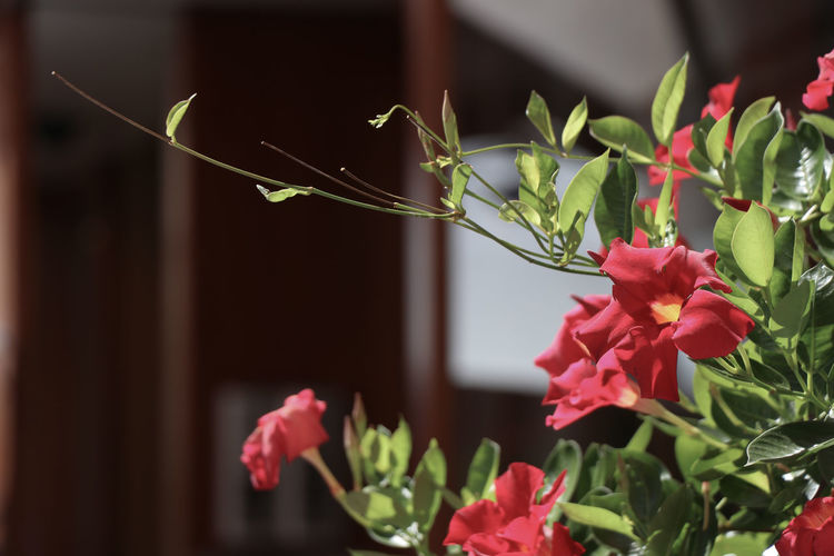 Flowers in a city City Beauty In Nature Close-up Day Flower Flower Head Flowering Plant Focus On Foreground Fragility Freshness Green Color Growth Inflorescence Leaf Nature No People Outdoors Petal Pink Color Plant Plant Part Vulnerability
