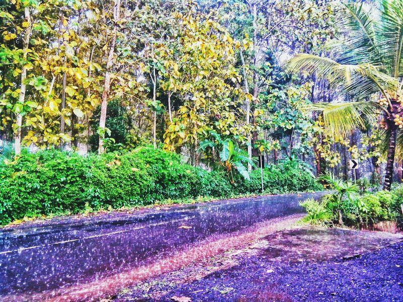 Rainy Day Raindrops Heavy Rain Forest Silence Before The Storm