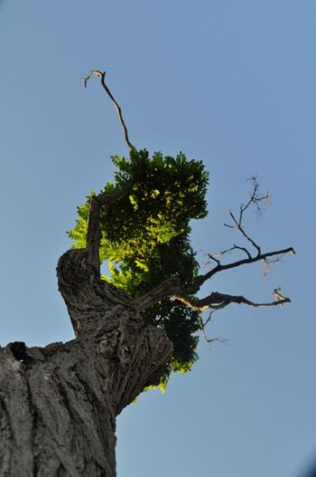 Naturelovers Tree_collection  Trees And Sky Clear Sky Artnature Treescollection Ağaç Kabuğu Yeşil Doğa Gökyüzümavi Temizhava Green Green Green!  LoveNature