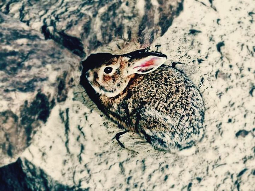 Learn & Shoot: Simplicity Rabbit Badlands Worland WY Wyoming EyeEm Nature Lover Beautiful Nature