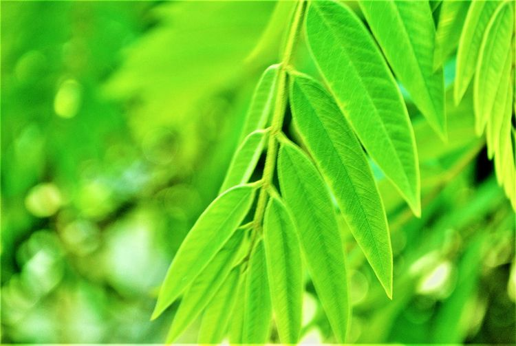 A little green. Green Color Nature Beauty In Nature Growth Close-up Day Outdoors Freshness Leaf No People Zeeromoments Travel Photography Freedom Colour