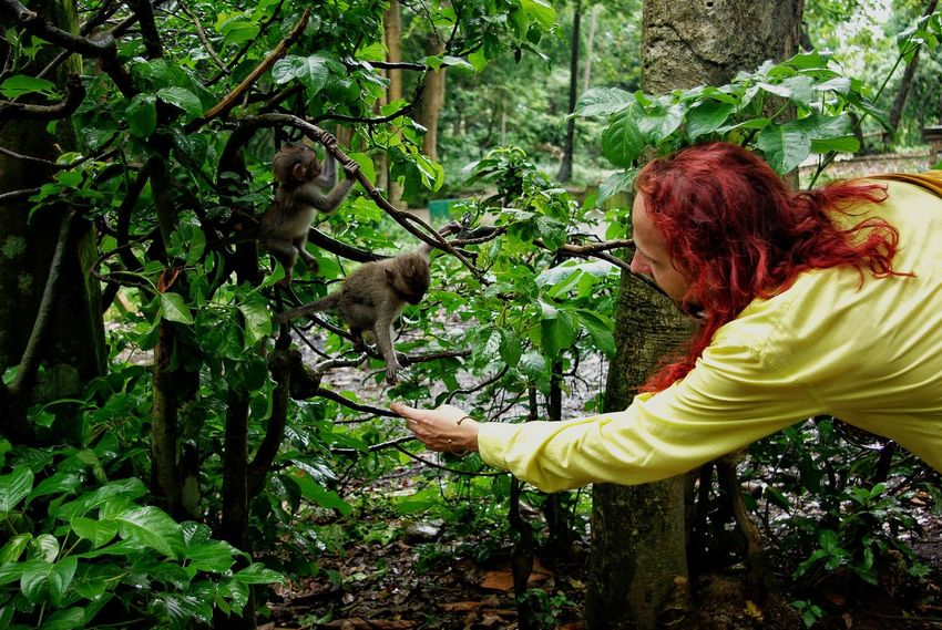 Outdoors Green Color Paint The Town Yellow Nature Little Animals INDONESIA Ubud, Bali Monkey Forest Little Monkey Human And Animals Human And Nature Encounter Curiosity The Week On EyeEm An Eye For Travel