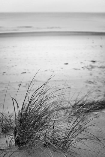 Sea Nature Water Beach Tranquil Scene Tranquility Horizon Over Water Beauty In Nature Scenics Outdoors Sand No People Day Marram Grass Sky Grass Sand Dune Close-up Blackandwhite Blackandwhite Photography The Week On Eyem EyeEm Best Edits EyeEm Best Shots The Week On EyeEm EyeEm Gallery