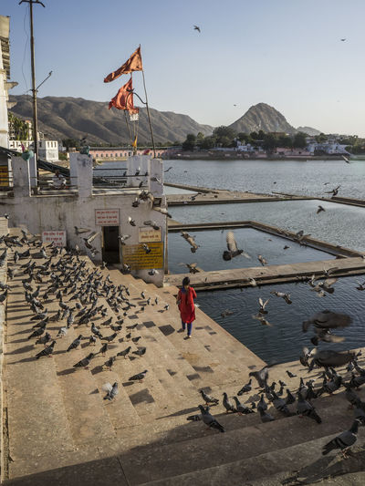 a lady feeding the birds in Lake Pushkar. Adult Day Feeding The Birds Holy Horizon Over Water India Lady Lake Lake View Nature Outdoors People Place Pyshk Sacred Sky The Birds Water