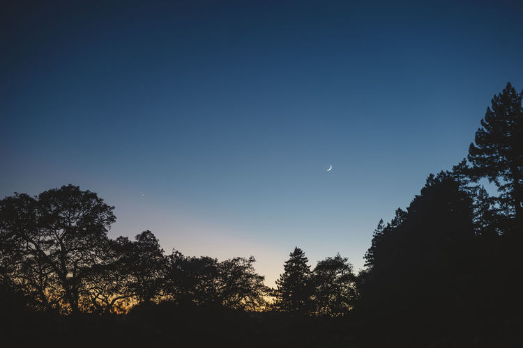 sliver of a moon Tree Sky Plant Moon Silhouette Beauty In Nature Tranquility Nature Tranquil Scene Clear Sky Crescent No People Scenics - Nature Low Angle View Growth Night Blue Dusk Half Moon Space Outdoors Astronomy Planetary Moon