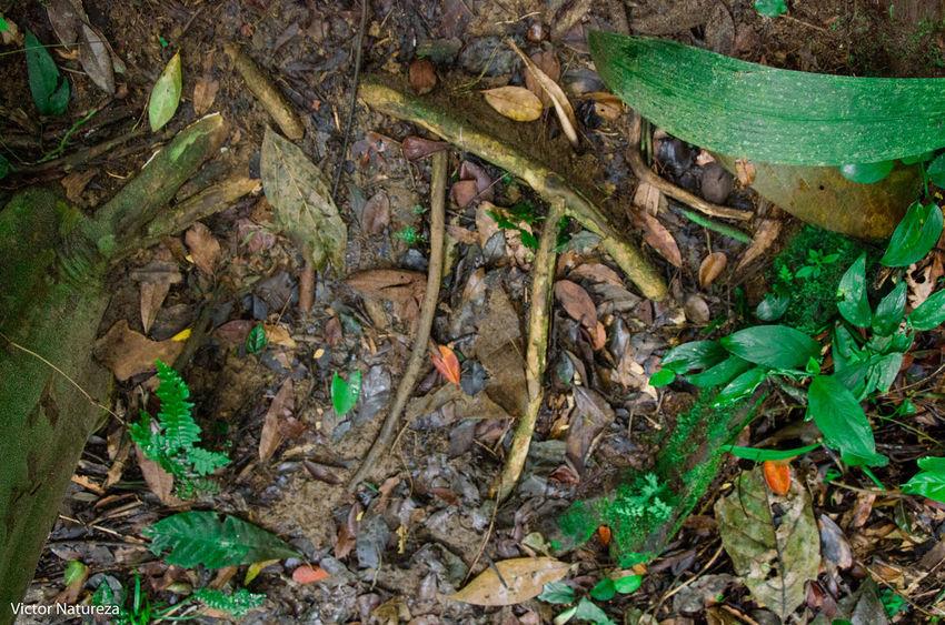 Brazil Paraty Travel Destinations Brasil Fotografiaautoral Photoart Artefotografia Vitaonatureza Victornatureza Documentaryphotography Fotodocumental Documentary Green Color Plant Nature