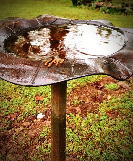 Rainy Day. Bird Bath. Back Yard EyeEmNewHere