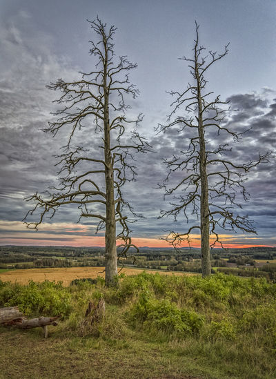 Bare Tree Beauty In Nature Branch Cloud - Sky Day Dramatic Sky Field Growth Landscape Nature Non-urban Scene Outdoors Rural Scene Scenics Sky Tourism Tranquil Scene Tranquility Travel Destinations Tree Tree Trunk Vacations