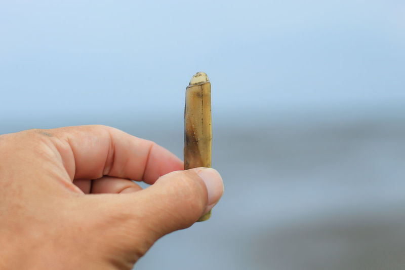 Snail shell in sea. Bad Habit Body Part Cigarette  Close-up Day Finger Focus On Foreground Hand Holding Human Body Part Human Finger Human Hand Lifestyles One Person Personal Perspective Real People Smoking Issues Unrecognizable Person
