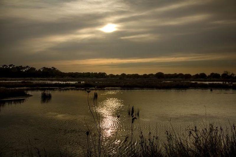 La camargue Grau-du-roi (France) Landscape_Collection Water Reflections Sky And Clouds Eye Em Nature Lover