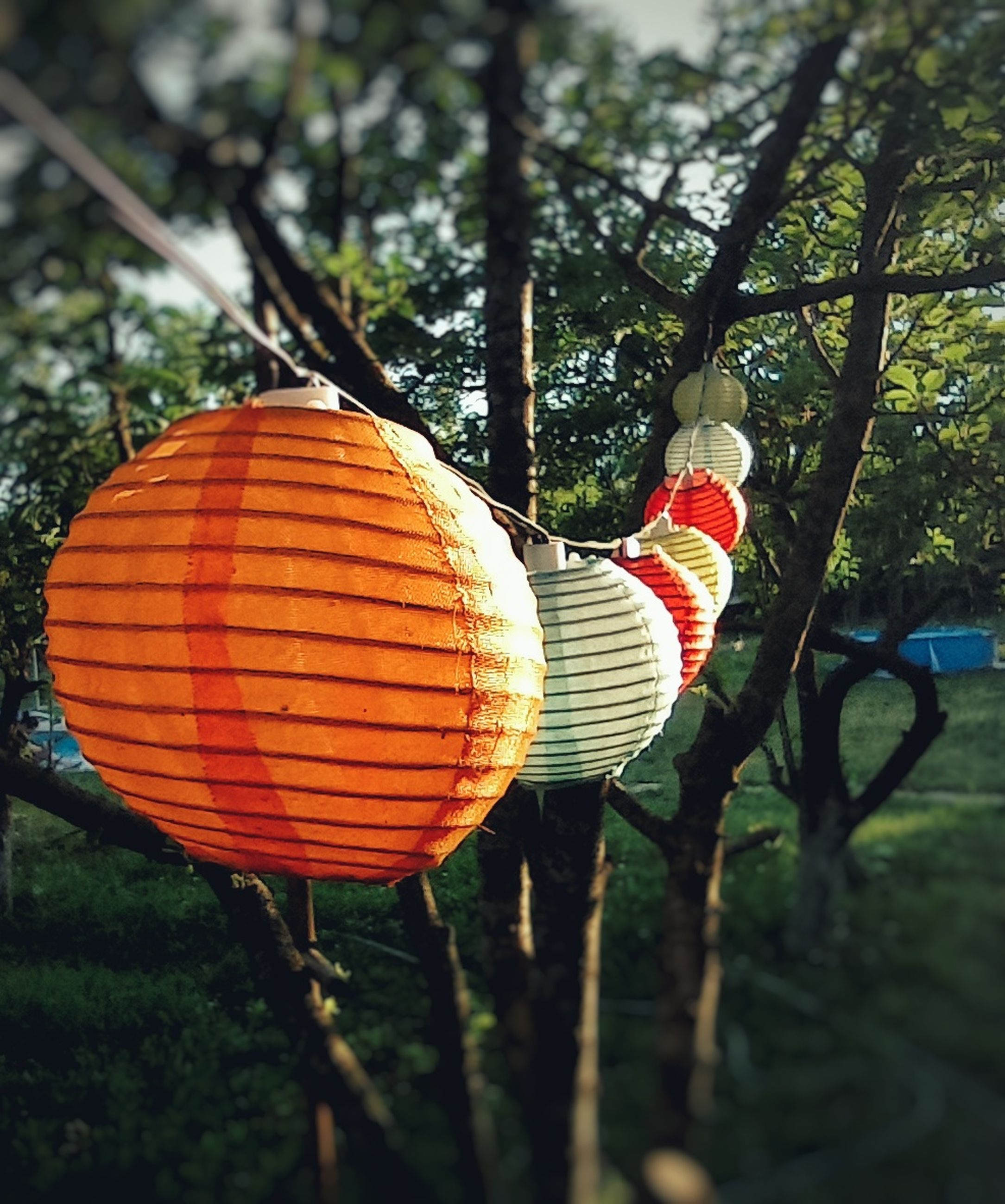 tree, plant, flower, leaf, hanging, nature, autumn, no people, day, celebration, yellow, outdoors, decoration, lantern, growth, branch, orange color, holiday, tradition, focus on foreground