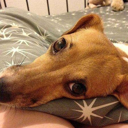 Je vous aime mes followers 💕🐕😍😘👍 Happynewyear 2016 Bonneannee Jackrussel Hug Love Dog Instacute Instalove Ilovemydog Iloveyou Jrt Happynewyear2016