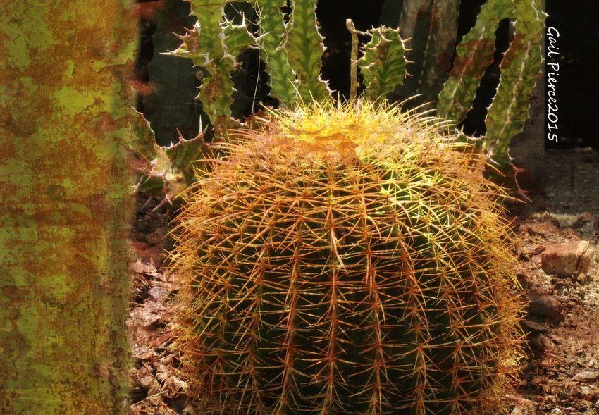 Backyard Vignette Digital Expression, Distressed, Cactus Desert Rustic,