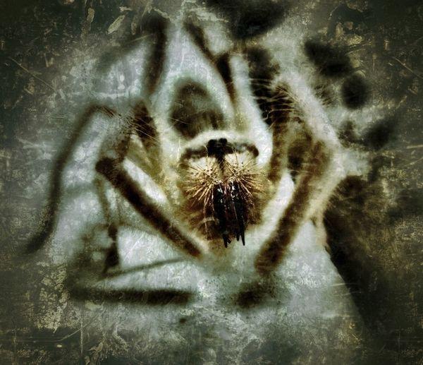 Horror In Nature Grungebug Camel Spider