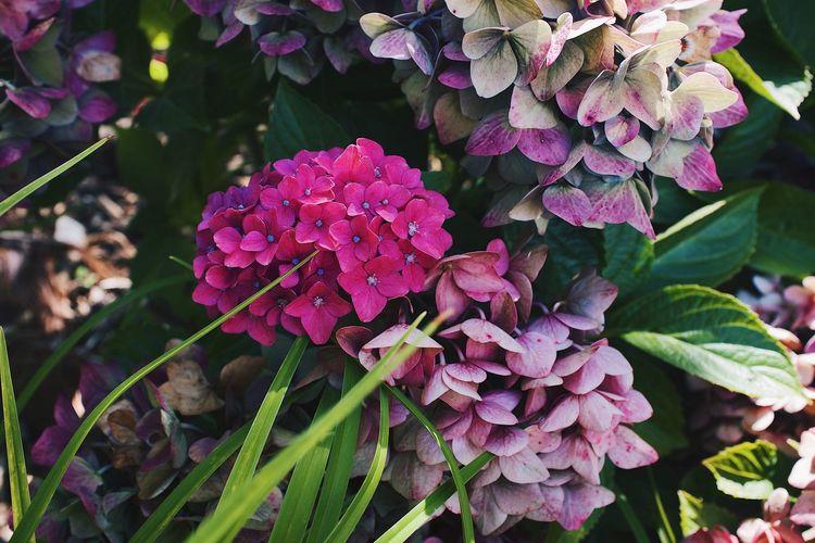 Flowers -garden