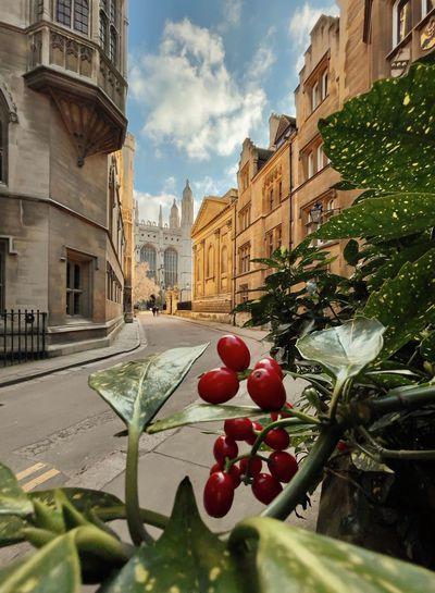 Red berries on plant in city against buildings