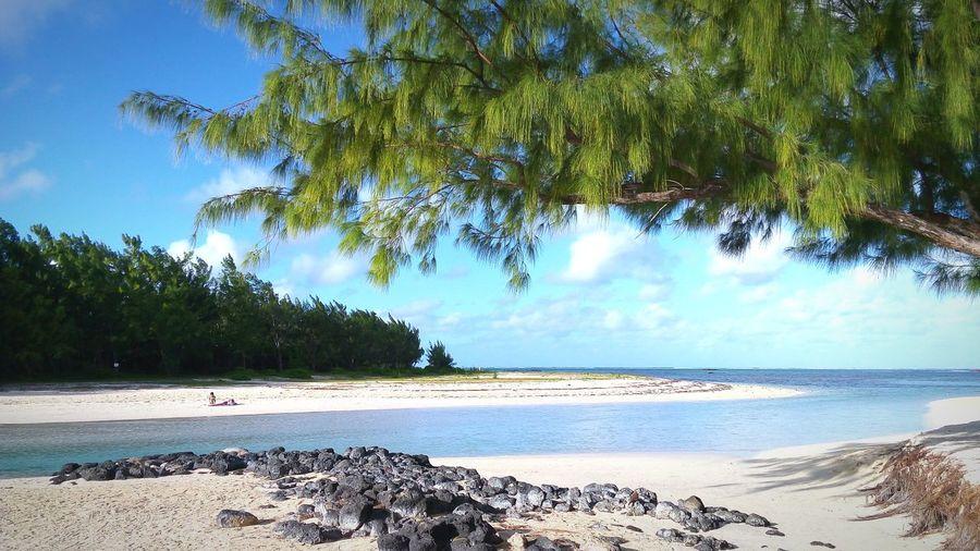 Beach Tree Sand Nature Sea Water Tranquility Outdoors Scenics Pine Tree Sky Blue Landscape Ilemaurice Mauritius Mauritius Island  Made In Mauritius