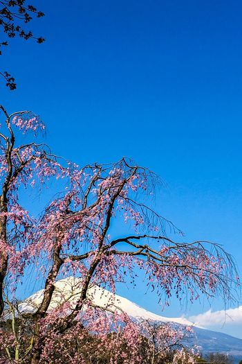 Blue Nature Low Angle View Clear Sky Beauty In Nature Day Tree Outdoors No People Sky Fragility