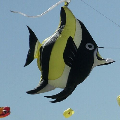 Flying fish Kirrakitefestival Kirra Petes2506 Festival Kite GoldCoast Holiday Vacation