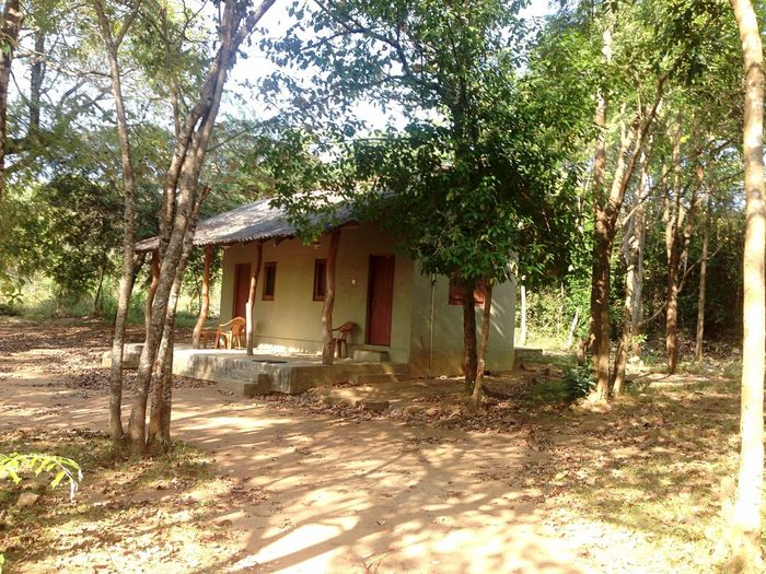 Sri Lanka Backpack Backpacking Guesthouse Jungle Jungle Life Sleeping House Holiday Explore Explore The Forest Jungle Trekking JungleHut Safari Safari Park Guest Tourist Tourism Nature Forest Park Jungle Shoot Backpacker BackpackersMemories Accomodation Hut