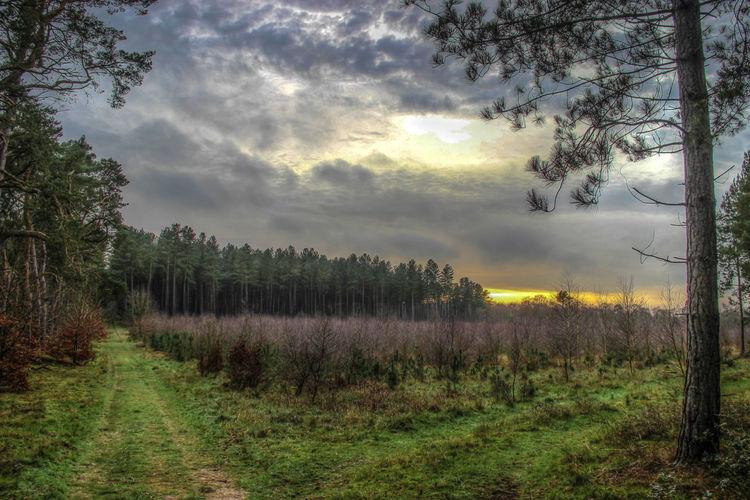Kings Forest Landscape Landscape Nature Photography Landscape_photography Landscape_Collection Landscape_photography Landscapes Thetford thetforFine Art Photography