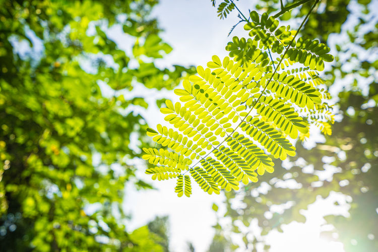 closeup green leaf with sunlight in the morning Background Backgrounds Beam Beautiful Beauty Branch Bright Environment Foliage Foreground Forest Freshness Green Greenery Growth Leaf Leaves Light Nature Oak Outdoors Pattern Plant Ray Rays Scenery Season  Space Spring Summer Sun Sunlight Sunny Sunshine Through Tree Trees White Woods Yellow Green Color Plant Part Focus On Foreground Close-up Day Beauty In Nature Low Angle View Tranquility Selective Focus Vulnerability