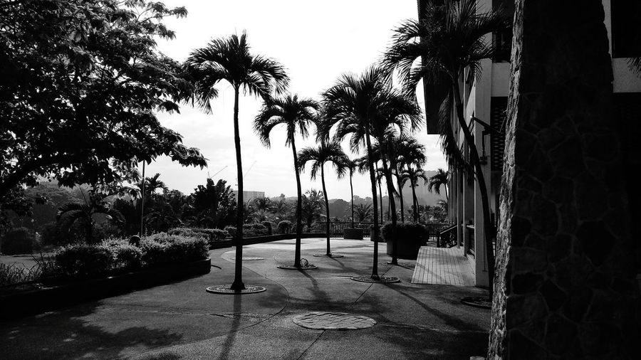 Palm trees by swimming pool in city against sky