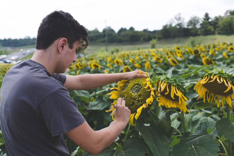 Side view of teenage boy examining sunflower against sky