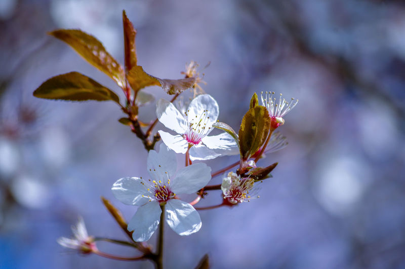 EyeEm Best Shots EyeEm Nature Lover EyeEmBestPics EyeEm Best Shots - Nature Beauty In Nature Wonders Of Nature Flower Head Flower Tree Branch Springtime Water Blossom Petal Close-up Sky In Bloom Plant Life Botany