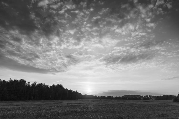 Scenic view of field against sky during sunset Cloud - Sky Sky Landscape Field Environment Tranquil Scene Land Scenics - Nature Beauty In Nature Black And White Monochrome Västra Götaland Tranquility Plant No People Non-urban Scene Nature Tree Rural Scene Day Outdoors Grass Idyllic Agriculture Meadow Growth Cloudscape Weather Season