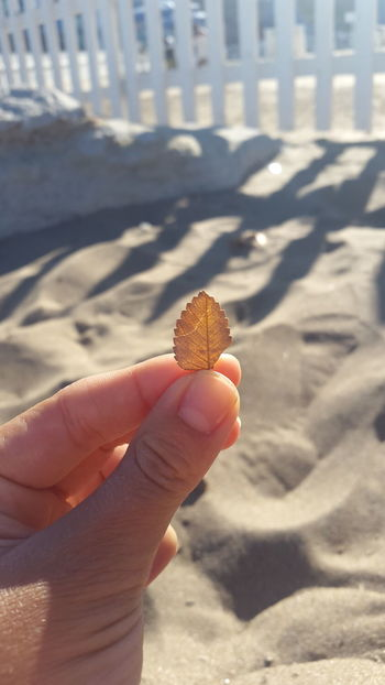 Focus On Leave Hojas De Otoño Autumn🍁🍁🍁 Autumn Leaves Beach Photography Sunshine Relaxing Inhale Exhale