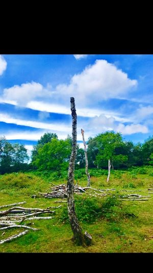 Beauty In Nature Sky Cloud - Sky Outdoors Green Color Scenics Tree No People Wirral United Kingdom Royden Park