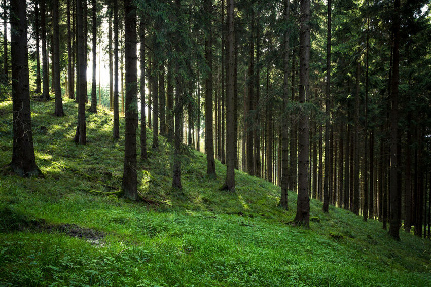 Deutschland ExploreEverything Waldspaziergang Wood WoodLand Beauty In Nature Day Eyyem Forest Germany Grass Green Color Harz Harzmountains Nature No People Outdoors Scenics Tree Wald Walden Waldlandschaft Wood - Material